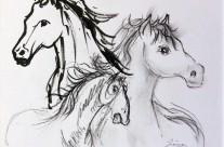 Etude pour le cheval