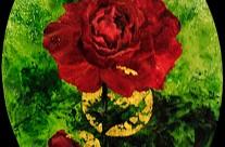 Rose rouge de Celles