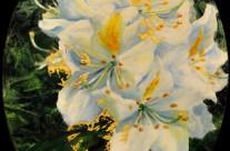Rhododendron du château
